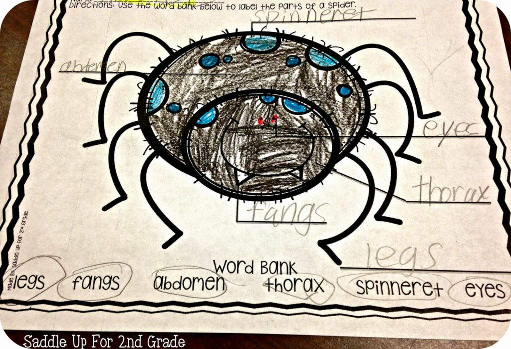 Spider Labeling FREEBIE by Saddle Up For 2nd Grade